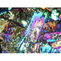 Microscopio binocular, objetivos Semi-plano 4x, 10x, 40x, 100x