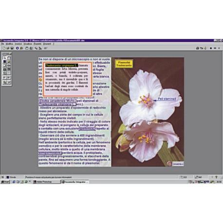 Curso Multimedia de Microscopia