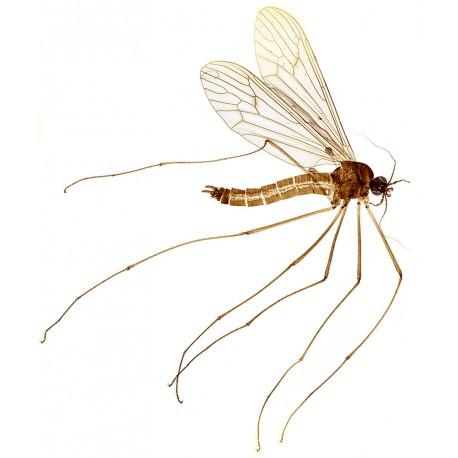 Insectos (12 preparados)