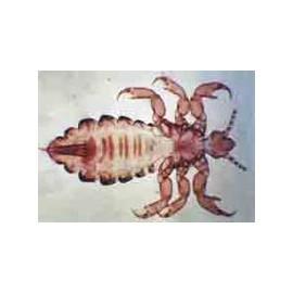 15911 Parasitología (12 preparados)