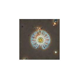 15614 Estudio de las ciencias elementales (10 preparados)