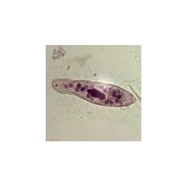 15615 Estudio de la biología 1 (10 prep.)